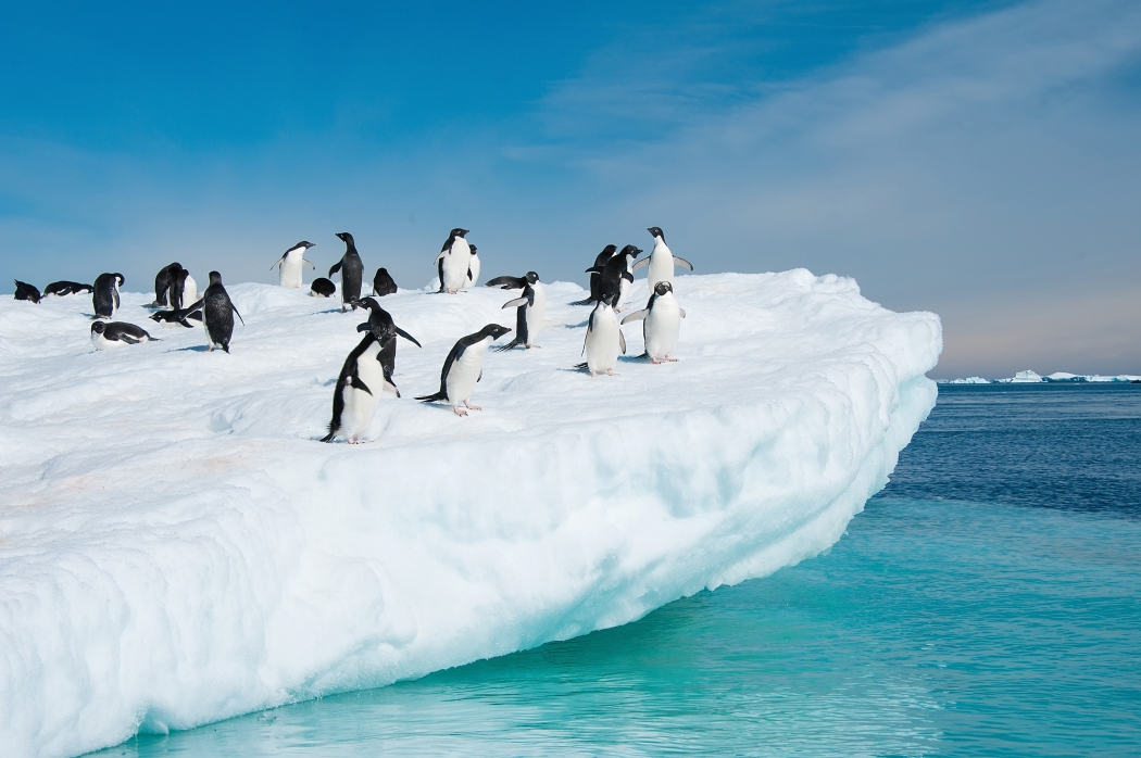 adelie_pinguine_auf_eisberg01