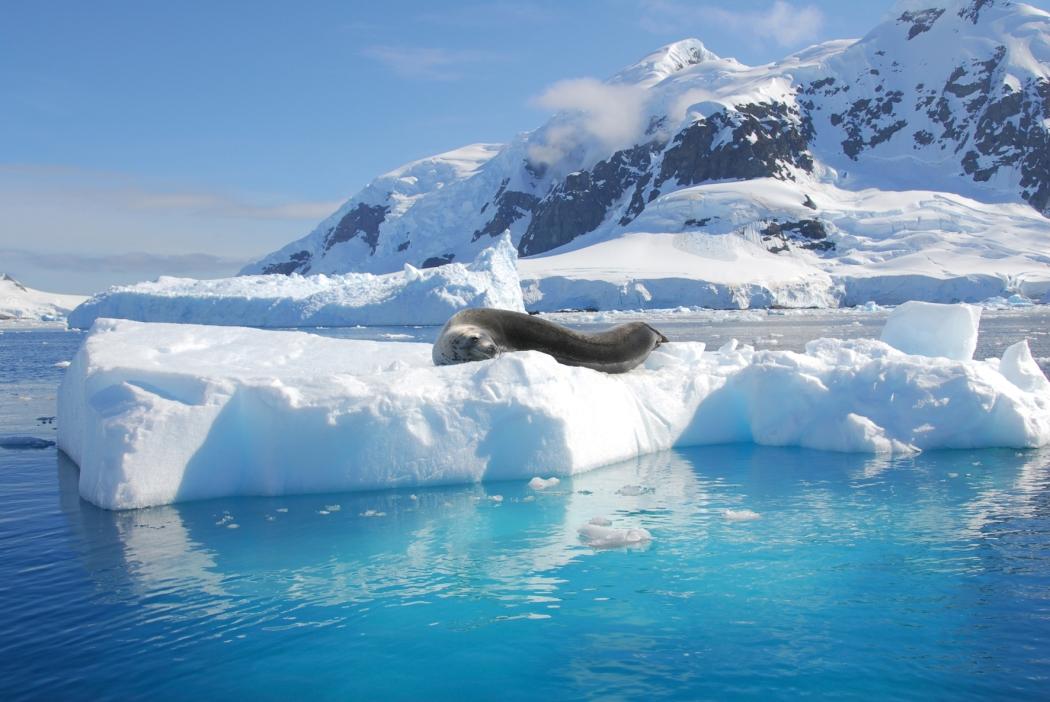 antarktis_leopard_seal01_m